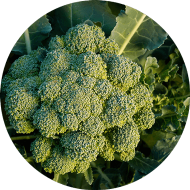 Broccoli for natural daily vitamins